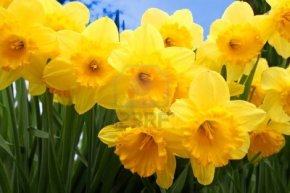 Energy Healing: Spring Equinox2013