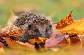 Autumn Calling! Festivals, Energy Tips &Updates