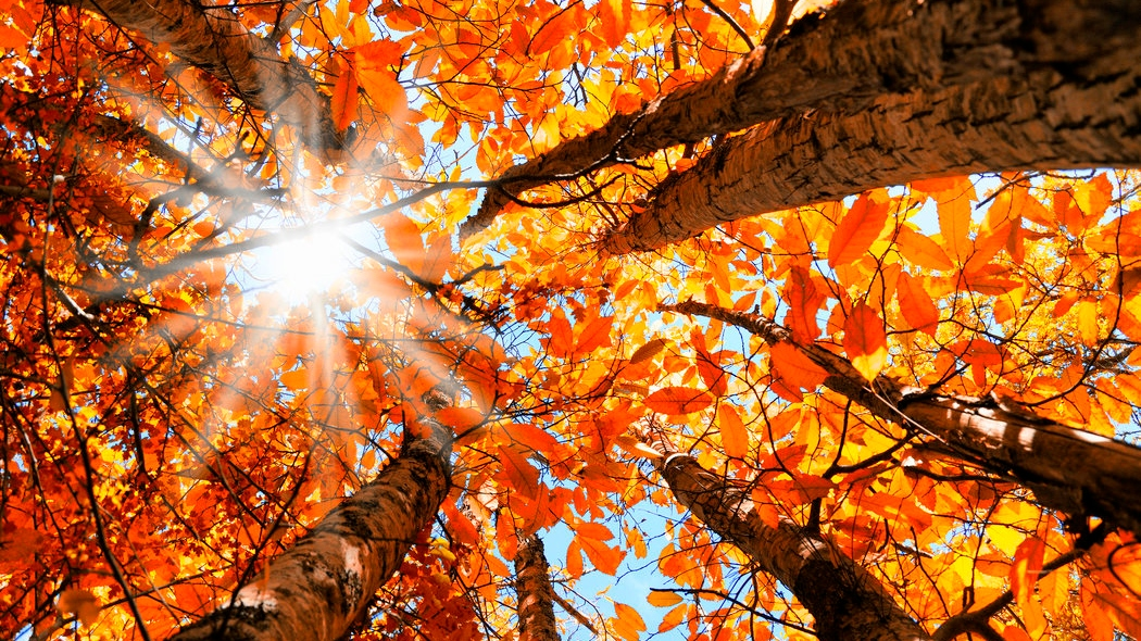 AUTUMN EQUINOX MEDITATION (30 Mins)